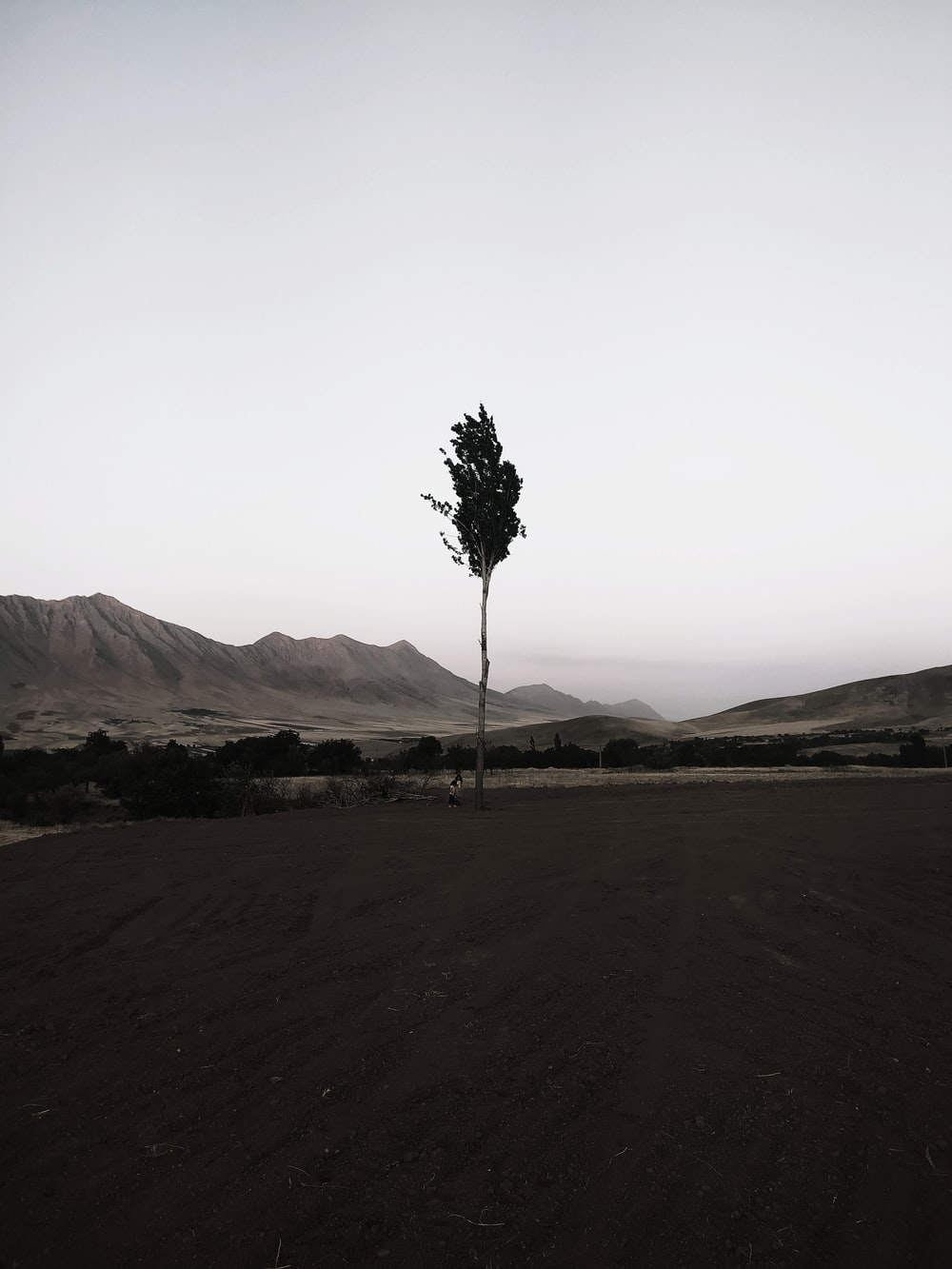 green tree on brown field during daytime