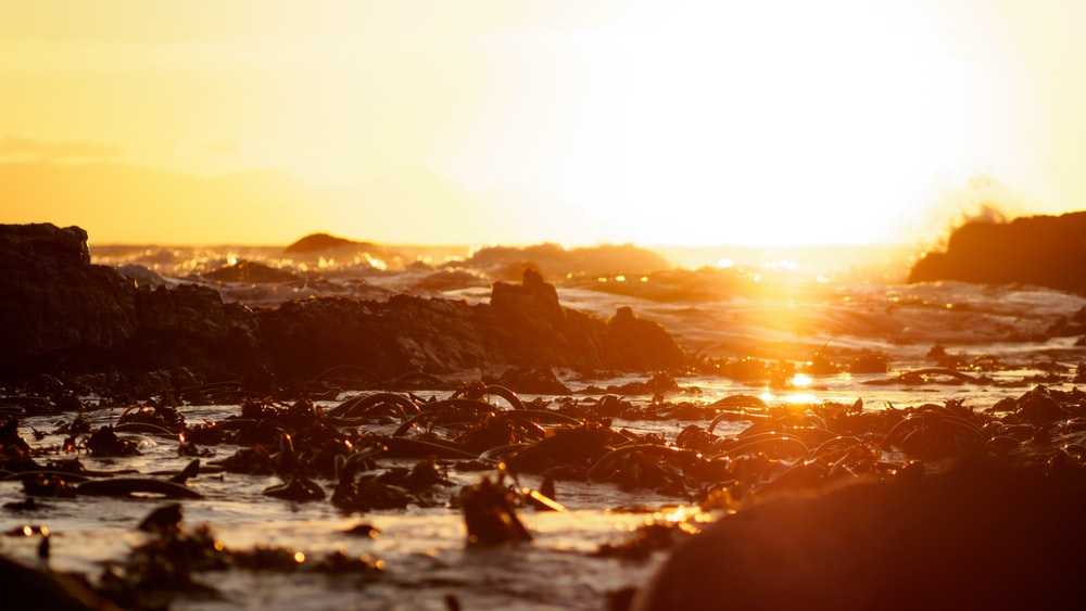 person sitting on rock formation during sunset