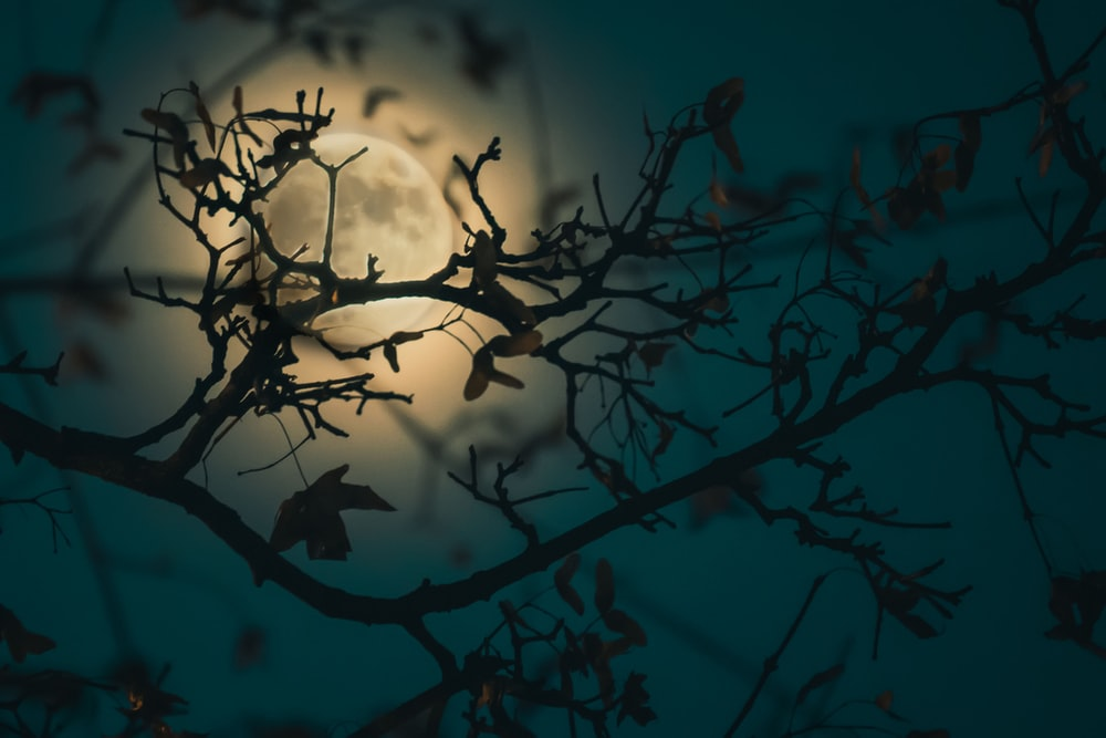 silhouette of tree branch with moon