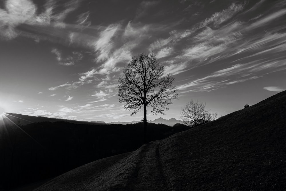 silhouette of bare tree under cloudy sky during daytime