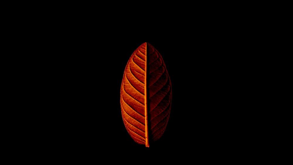 orange leaf in dark room