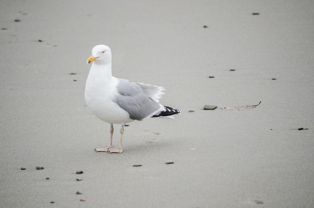 white gull on gray sand during daytime