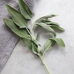 green plant on white textile