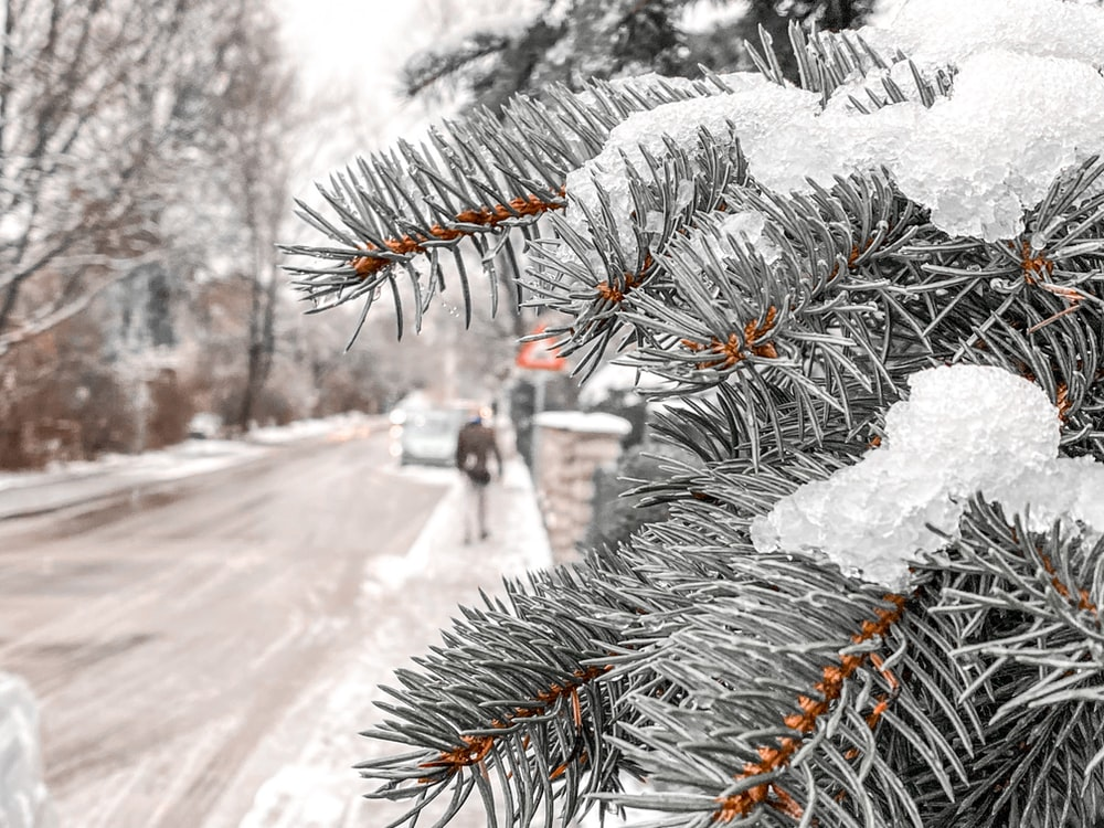 snow covered pine tree during daytime