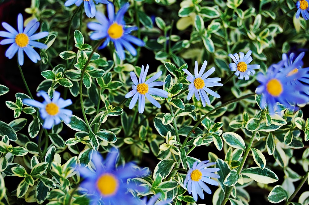 blue and yellow flowers with green leaves