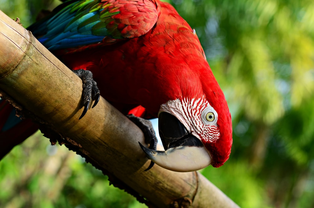 red blue and green parrot on brown tree branch
