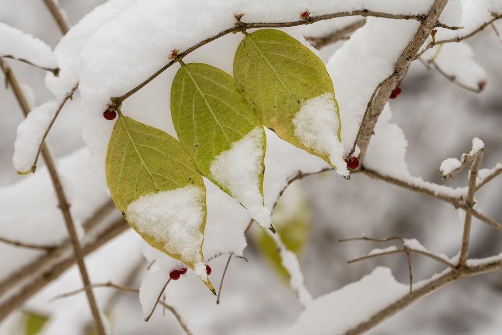 green leaves on white snow