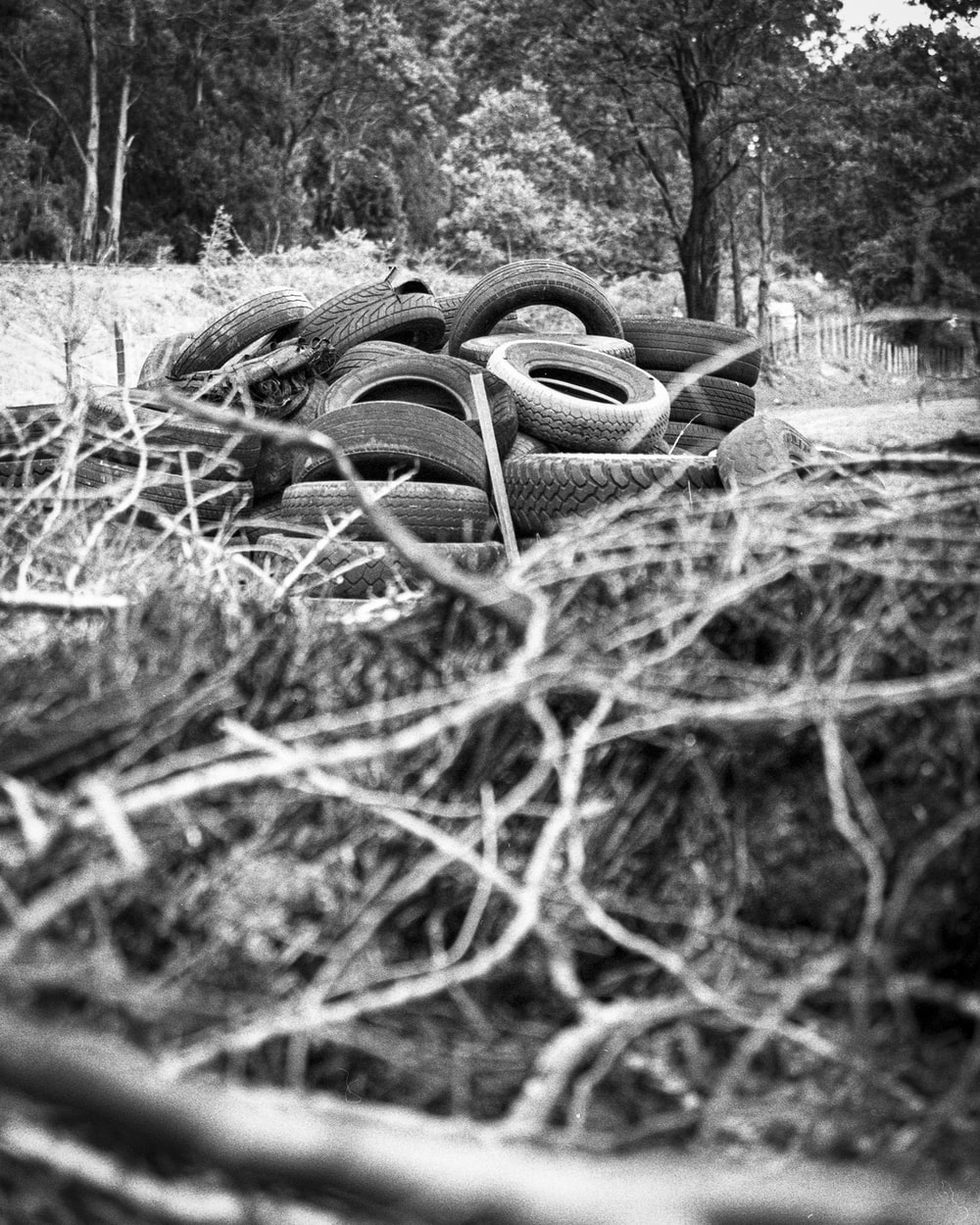 grayscale photo of a tree trunk