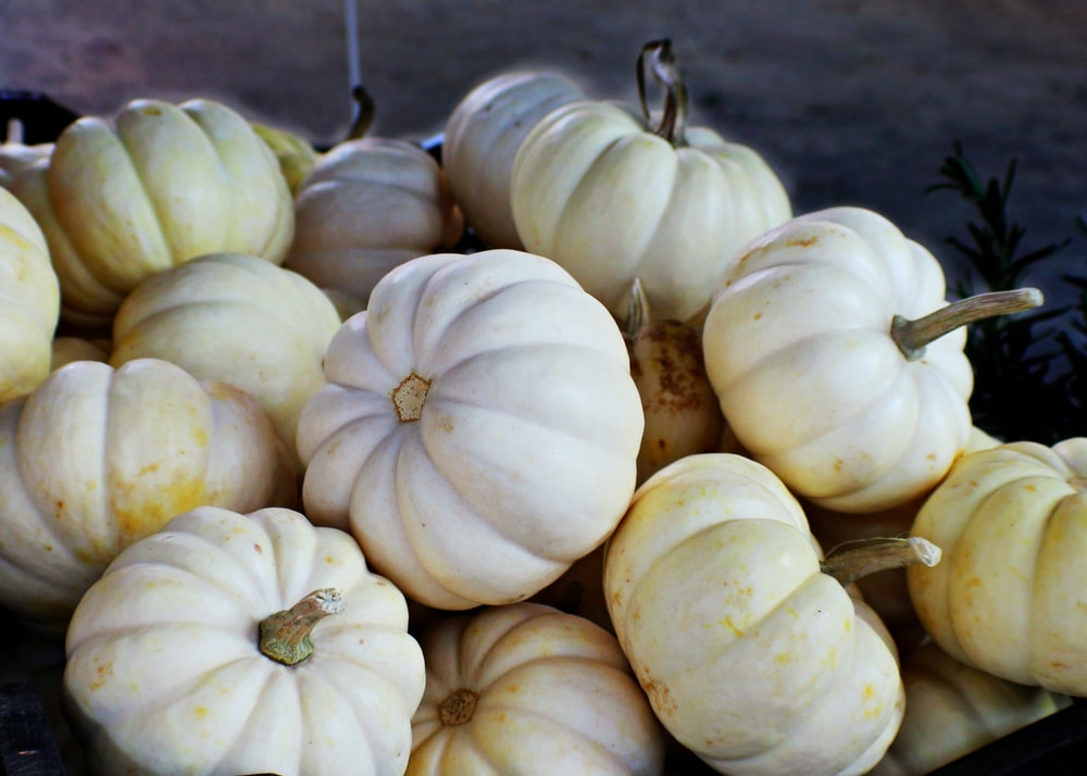 white and yellow pumpkins on ground