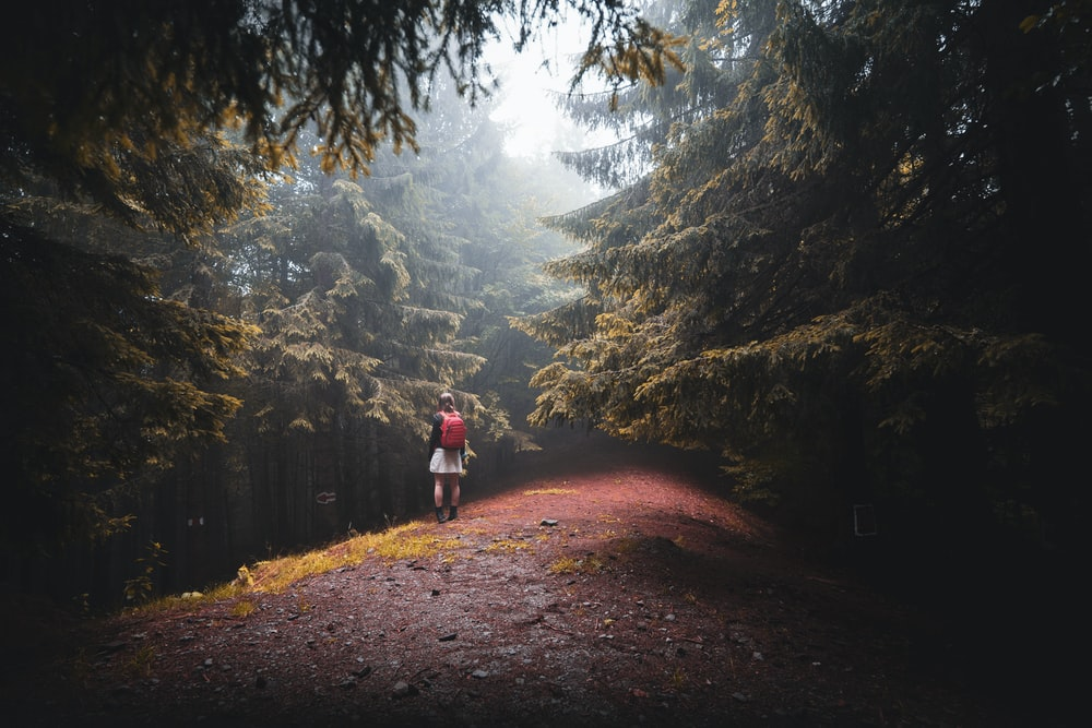 person in red jacket walking on dirt road between trees during daytime