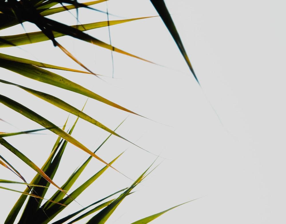 green palm plant under white sky