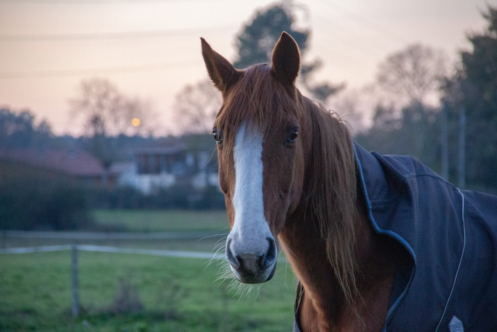 brown and white horse in blue jacket