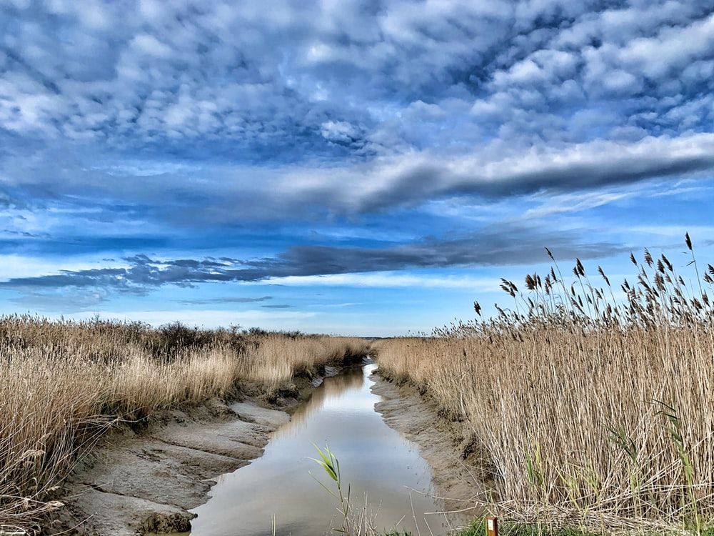 green grass on gray sand near body of water under blue sky and white clouds during