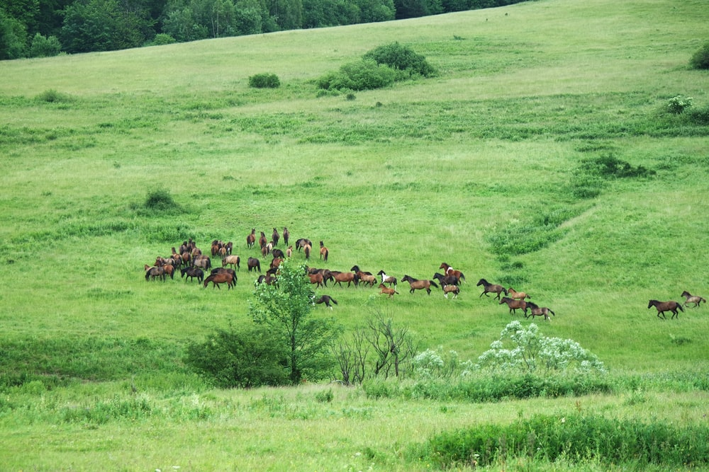 brown and black horses on green grass field during daytime