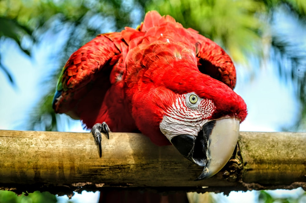 red and white parrot on brown wooden stick
