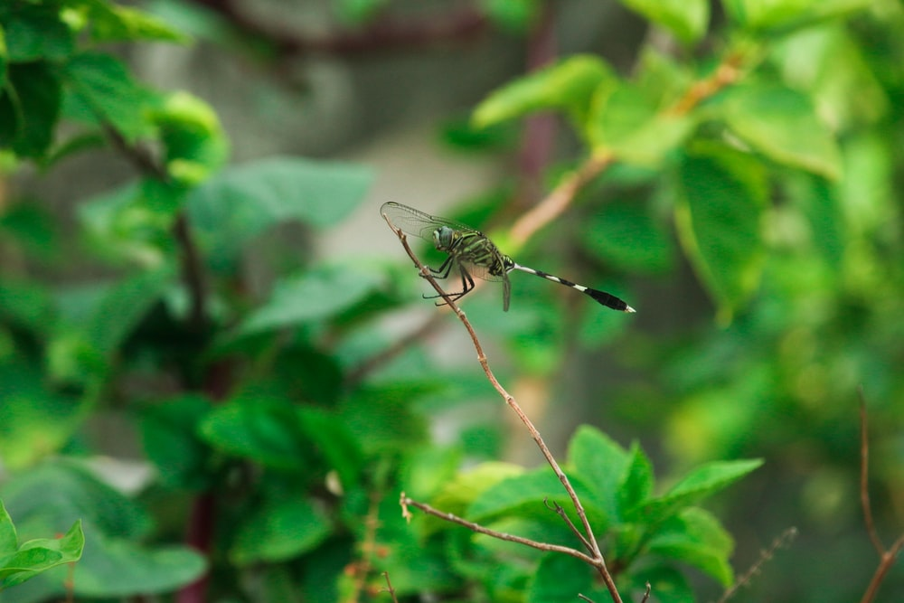 black and brown dragonfly on green leaf during daytime