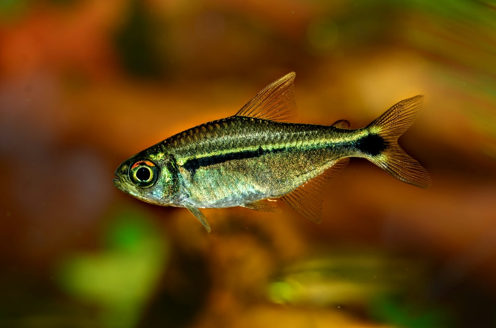 grey and black fish in close up photography