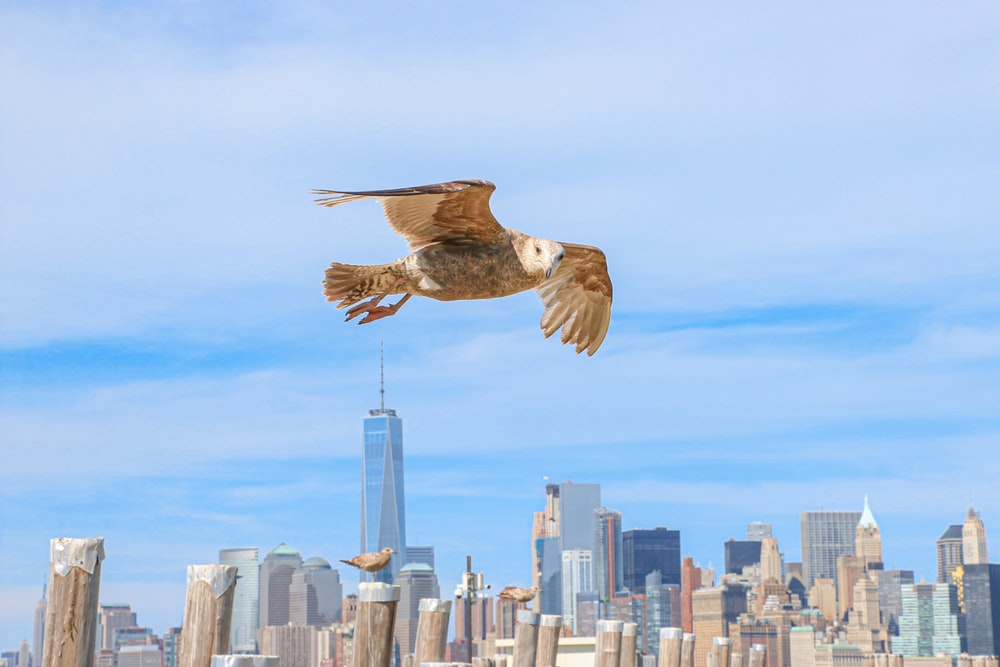 brown and white bird flying over city buildings during daytime