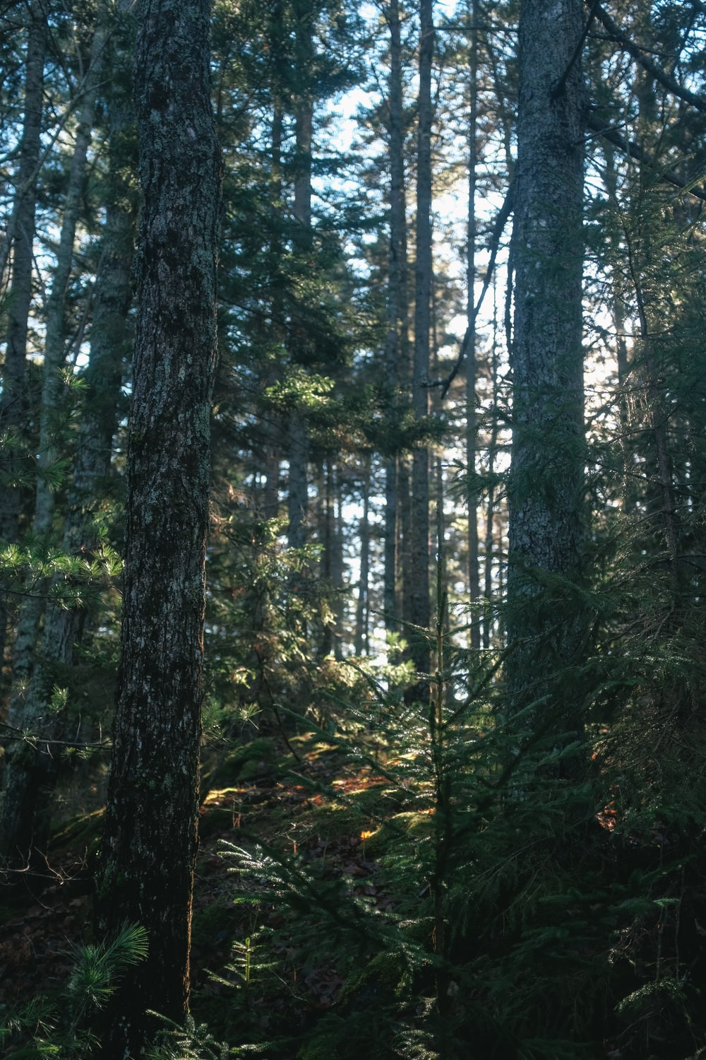 green trees in forest during daytime