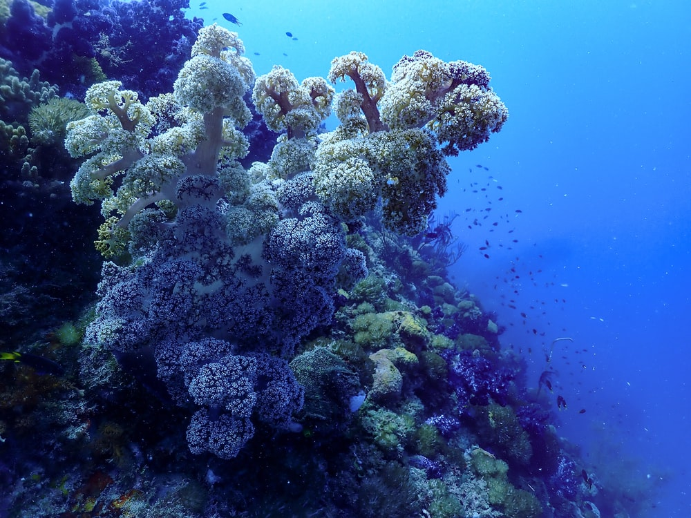 gray coral reef under water