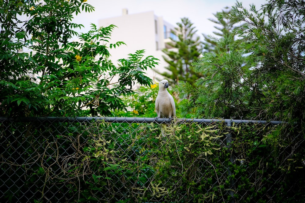 white and yellow bird on black metal fence during daytime