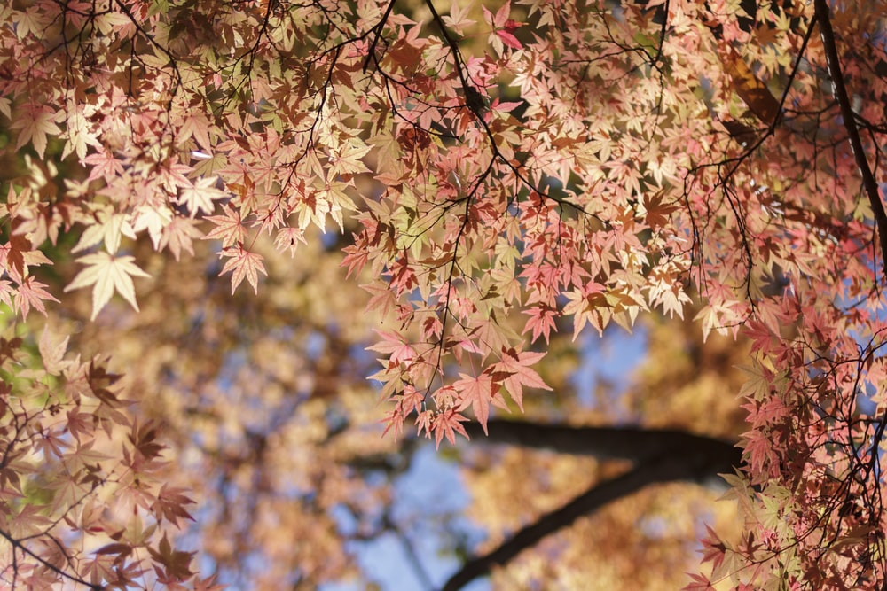 pink and yellow leaves on brown tree branch during daytime
