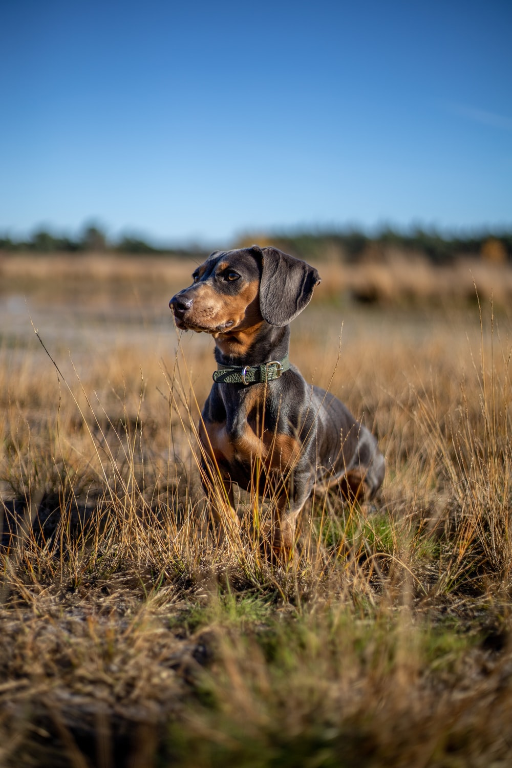 black and brown short coated dog on green grass field during daytime