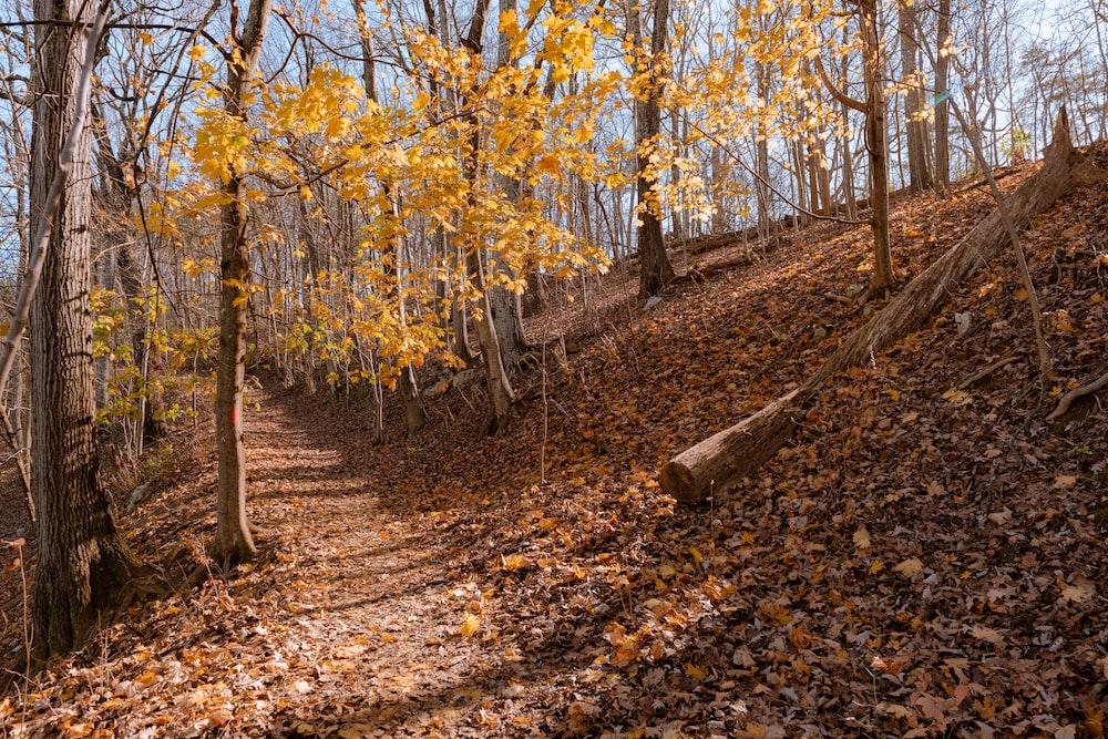 brown trees on brown soil during daytime
