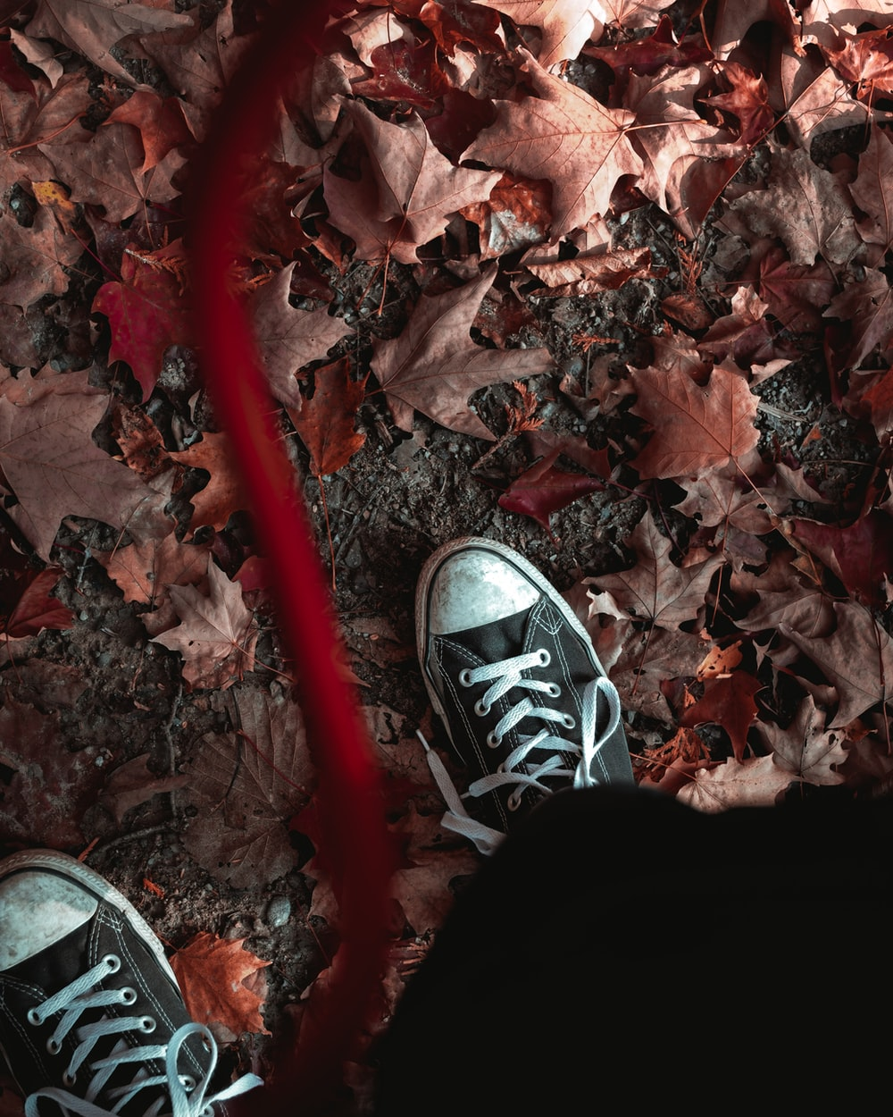 person wearing black pants and black and white sneakers standing on dried leaves
