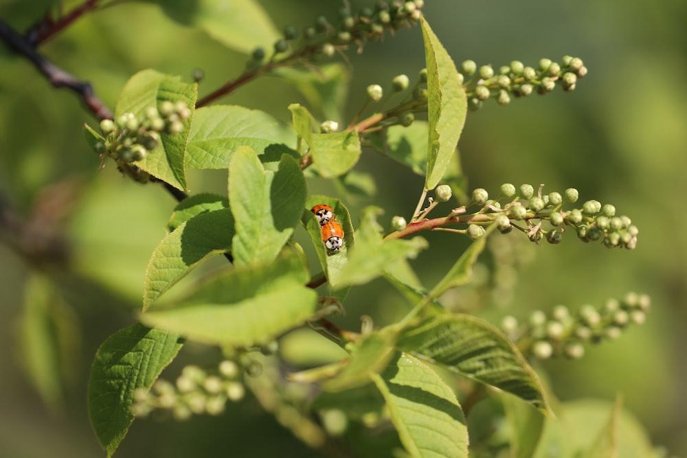 red and black ladybug on green leaf during daytime