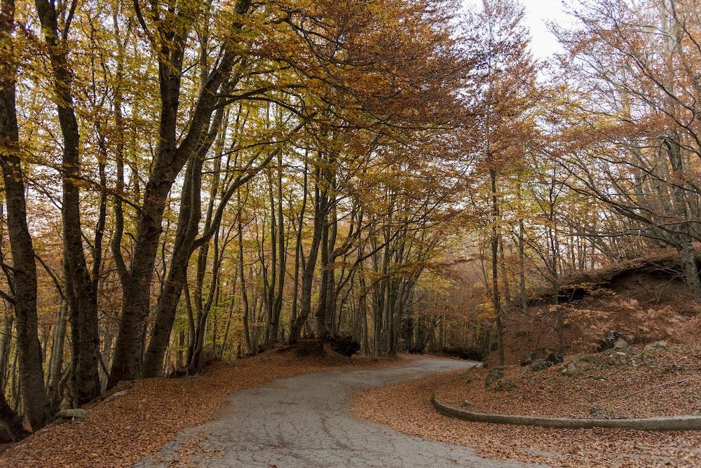 brown trees on brown soil
