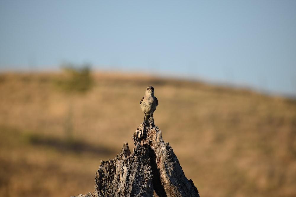 brown bird on gray rock during daytime
