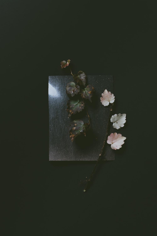 white flower on black surface