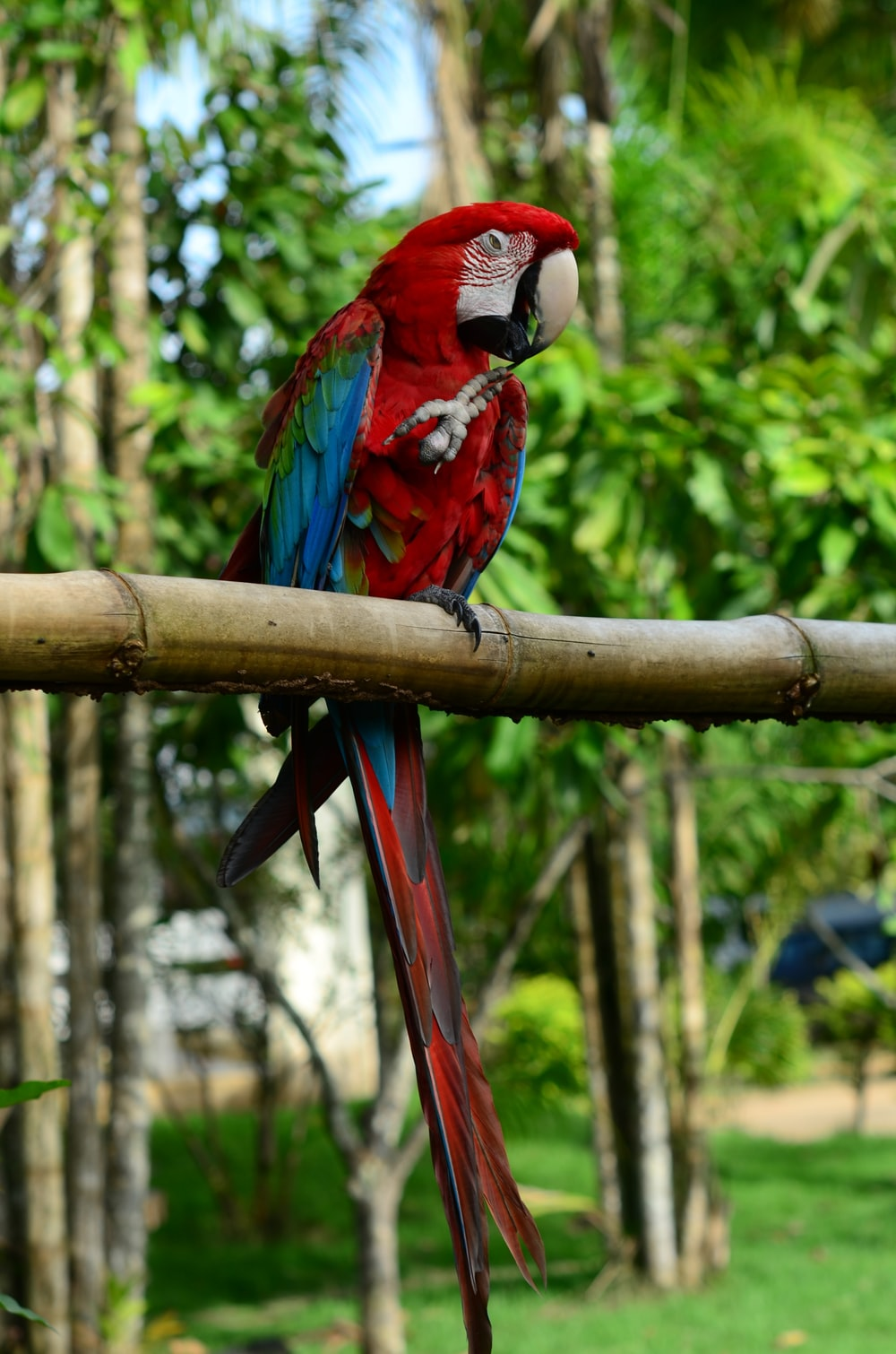 red blue and green macaw on brown wooden stick during daytime