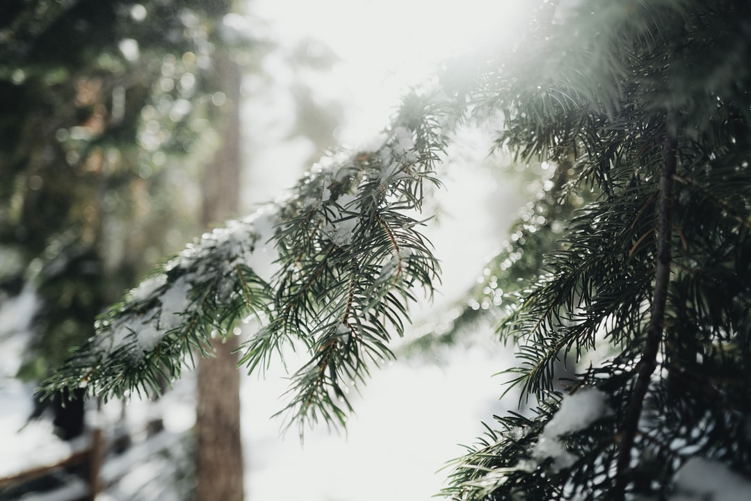 Winter Tree Branch With Snow - unsplash