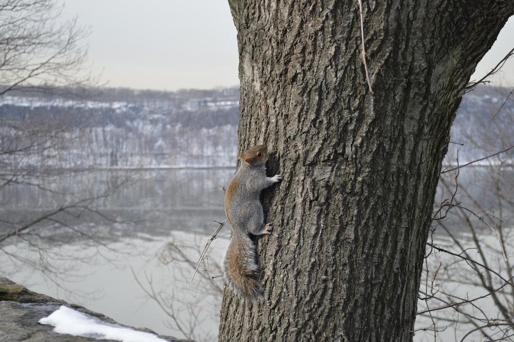 squirrel on brown tree during daytime