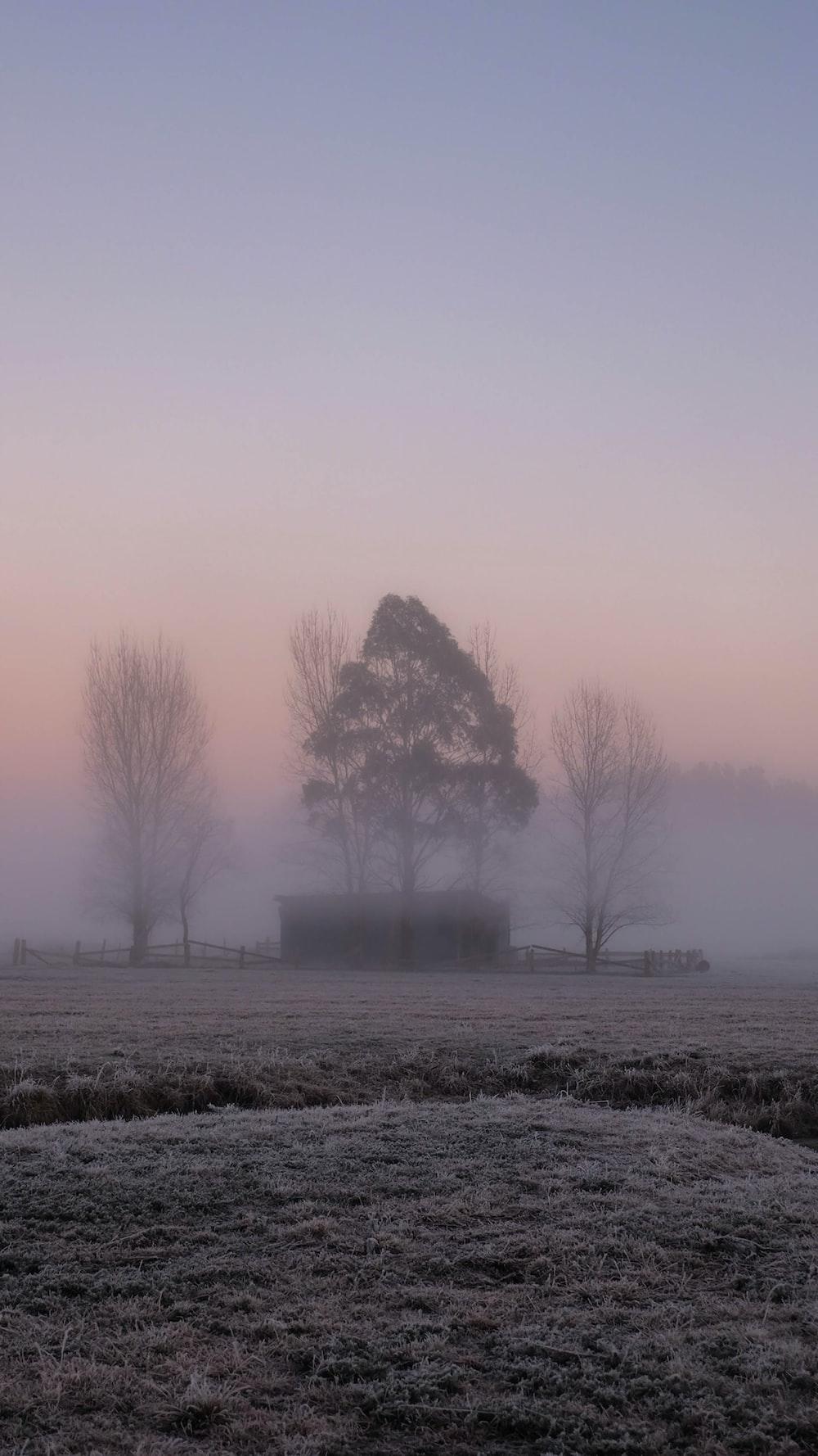 bare trees on field under gray sky