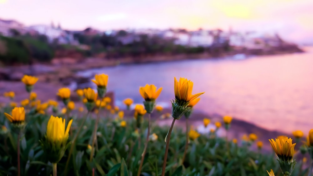 yellow flower near body of water during daytime