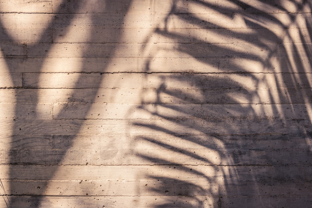 Palm Shadow - unsplash