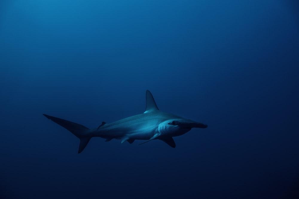 white shark under blue sky