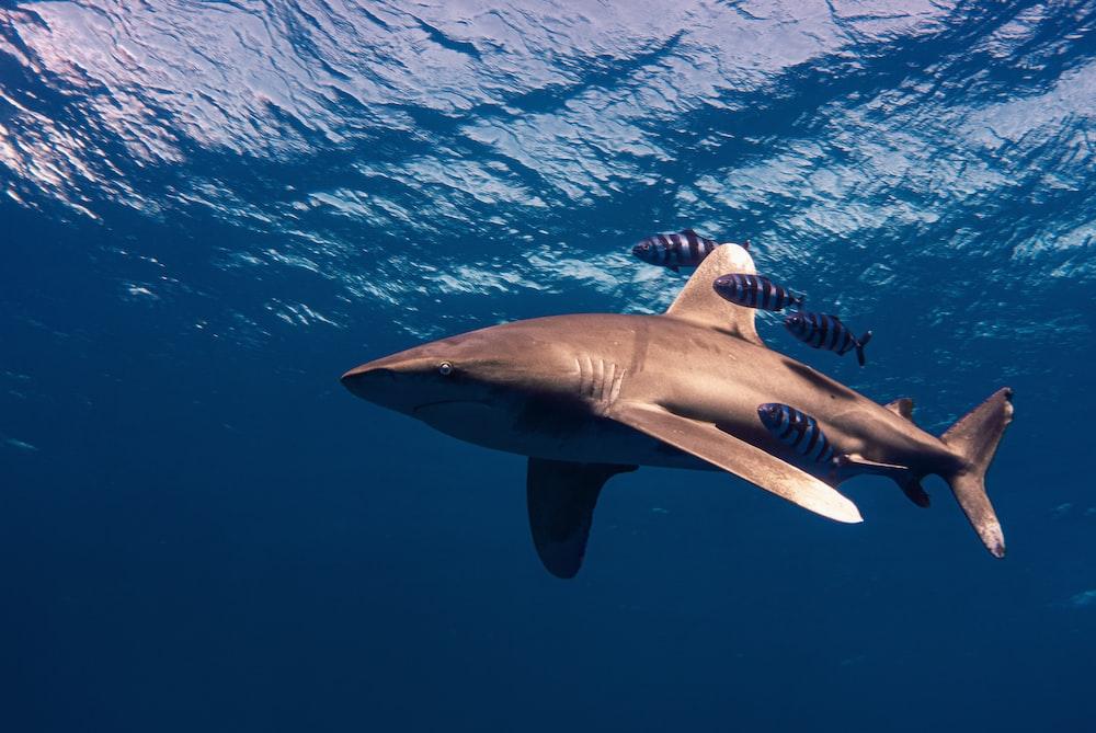 grey shark under water during daytime