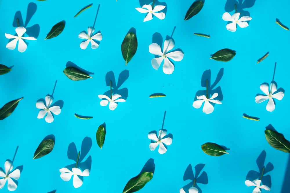 blue and black butterflies on blue sky during daytime