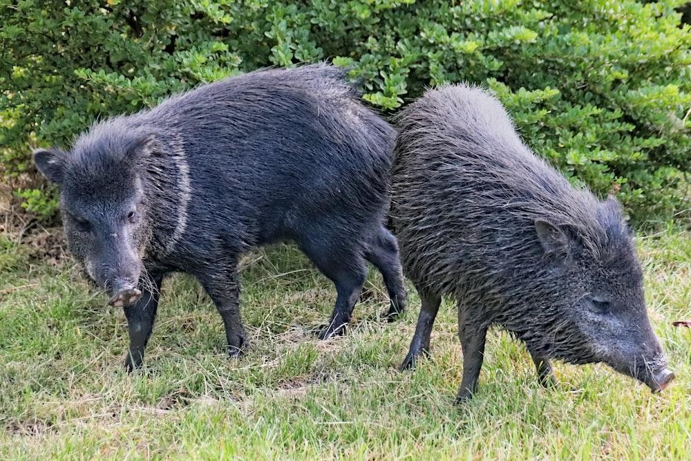 black animal on green grass field during daytime