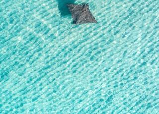 black star on blue water