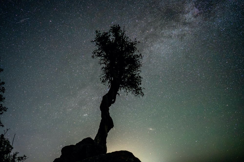 silhouette of tree on rock formation under starry night