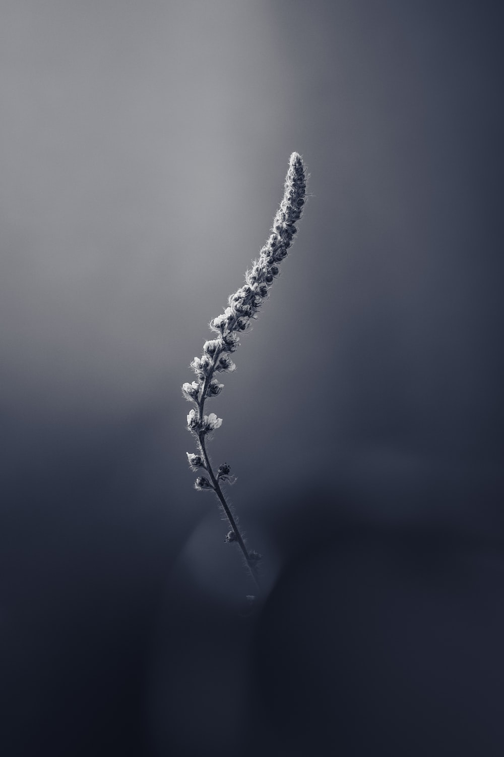 water droplets on plant stem