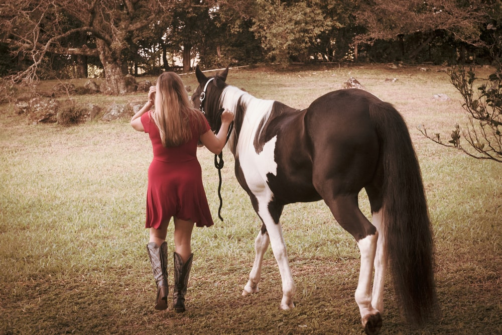 girl in red dress standing beside white and black horse during daytime
