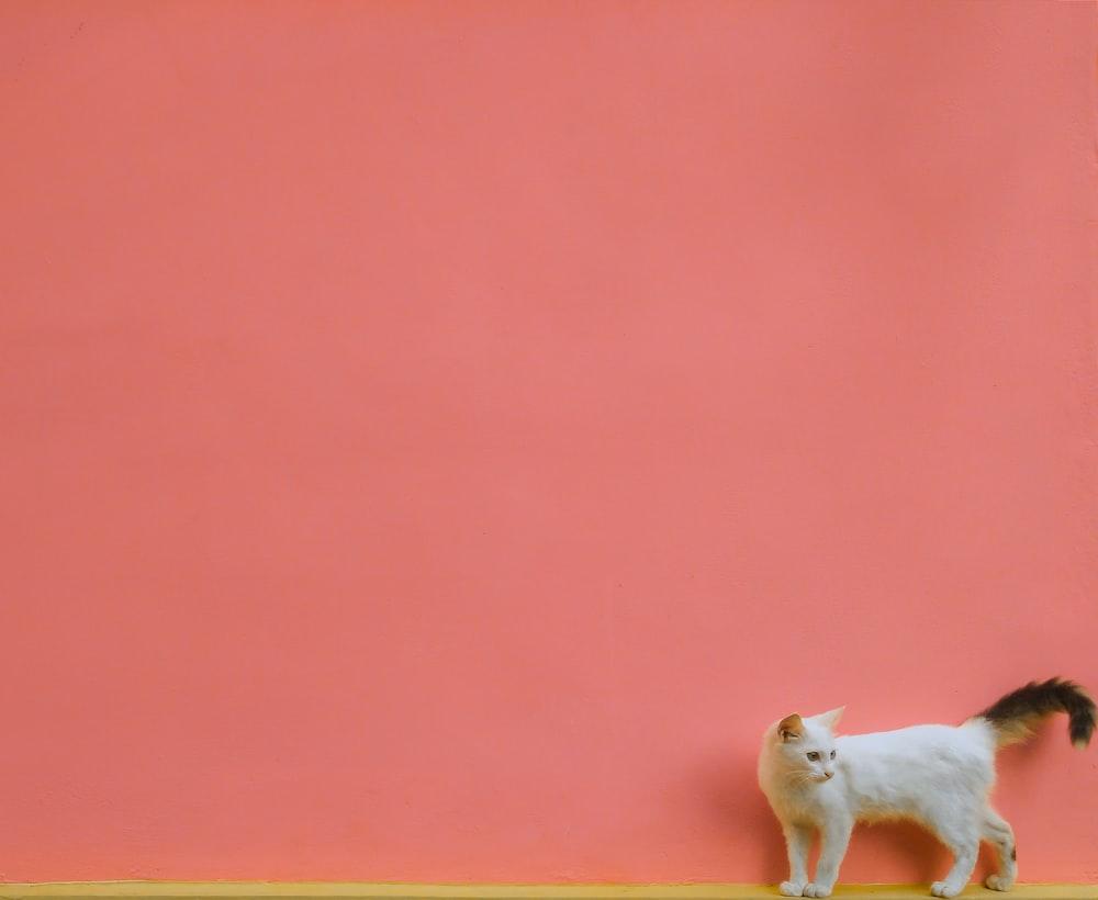 white short coated dog on orange textile