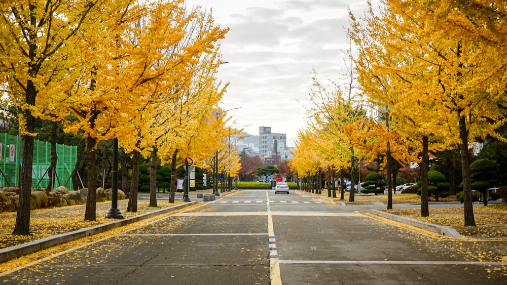 yellow leaf trees near gray concrete road during daytime