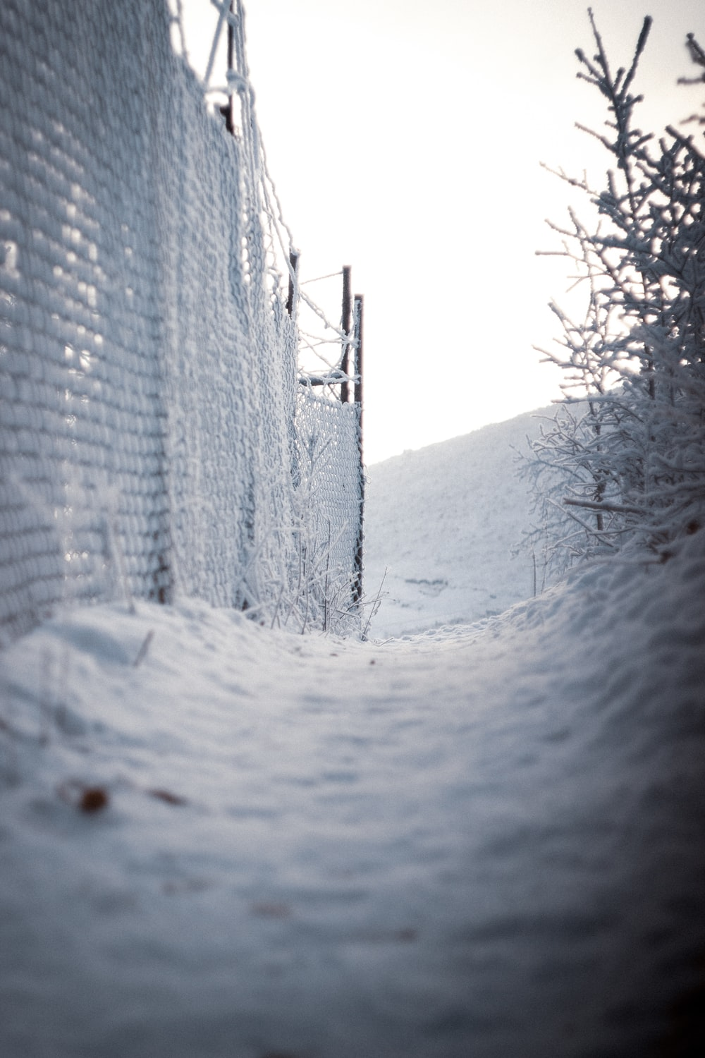 brown wooden fence with snow